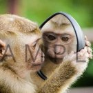 Photograph Wallpaper Digital Picture Desktop Background --- MONKEY MIRROR --- [Download]
