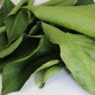 16oz Organic Loose Dried Lemon Leaves Bulk Herb Smudge Tea Magic Witchcraft Occult Fragrance