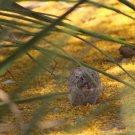 Hidden Rabbit Among Golden Palo Brea Flowers, Fine Art Photograph for Interior Design