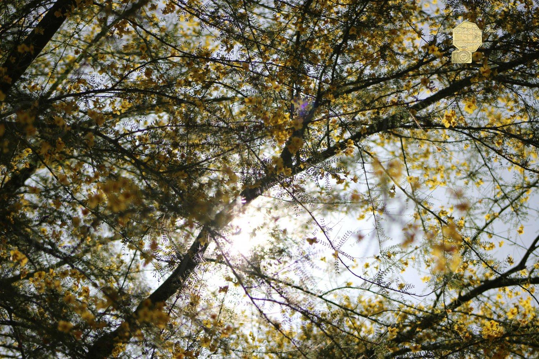 Golden Skies, Fine Art Photograph for Interior Design