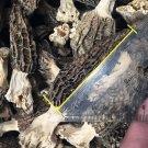 Wild Morchella Whole Dried Mushrooms 5 kg (176.36 oz)