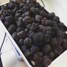 Wild Tuber melanosporum Black Truffle FRESH Mushrooms  200 gr (7.05 oz)