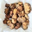 Wild Tuber Magnatum White Truffle FRESH Mushrooms 200 gr (7.05 oz)