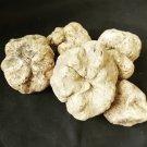 Wild Tuber Magnatum White Truffle FRESH Mushrooms 1 kg (35.27oz)