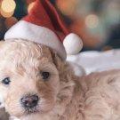 Christmas Pet Santa Hat Dog Cat Gift Costume Plush Xmas holiday Accessory Prop Santa Paws