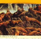VINTAGE - Postcard Sea Lions on the Pacific Coast