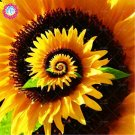 60pcs/bag Daisy Rare flower Perennial indoor Potted plants for home garden Style 3