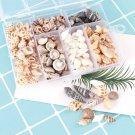 Box Natural Conch Shells 100Pcs