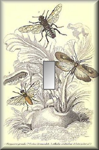 Vintage Illustration of Various Insects Single Switch Plate