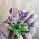 Miniature Calla Lilly bush-miniature flowers-miniature plants-Dollhouseplants-realistic flowers