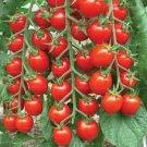 Sweet Tasty Tomato Potted Planting Bonsais food