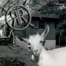 RUSTED REMAINS - WHITE TRASH - CD