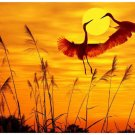 3d diy diamond embroidery painting sunset crane rhinestones picture