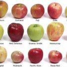 Apple fruit Mix(Jonathan, Golden, Idared, Fuji, Gala etc. ) 20 seed from Moldova