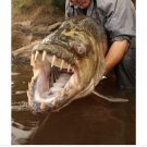 River monsters seasons 1 to 4 plus 6 7 and 9