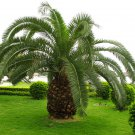Egrow 1PC/Pack Cycas Seeds Cycas Plant Bonsai Potted Flower Flores For DIY Home Garden Household