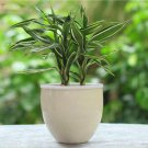 Egrow 30Pcs/Pack Rare Silver Heart Lucky Bamboo Seeds Bonsai Absorb Dust Tree Plant Anti Radiation D