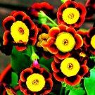 Egrow 100 Pcs/Pack Petunia Bonsai Seeds Colorful Star Petunia Flower Garden Patio Potted Plant
