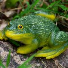 Green and Yellow Frog Garden or Patio Ornament