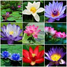 Beautiful Lotus Flower Seeds, Aquatic Plants Bowl Lotus Water Lily Seeds 10pcs