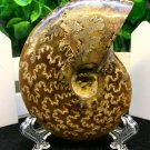 Natural Ammonite Nautilus Shell Jurrassic Fossil Specimen Madagascar 114g HLS2