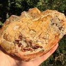 408g COLORFUL RAINBOW FANTASTIC Madagascar Petrified Wood Round Slab Bark #MHS1