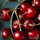 36 Black Cherry Merlot, Vegan Tea Light