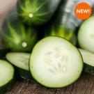 36 Fresh Picked Cucumbers, Vegan Tea Light, Soy Tea Light