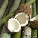 36 Bamboo and Coconu Vegan Tea Light, Natural Soy, Scented Tea light,  Box of36
