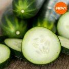 36 Fresh Picked Cucumbers Vegan, Natural Soy, Scented Tea light, Vegan Tea Light