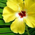 36 Hibiscus Palm, Vegan, Natural Soy, Scented Tea light, Vegan Tea Light