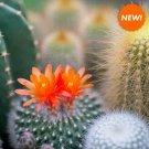 Cactus Flower and Jade, Vegan, Natural Soy, Scented Tea light,  Box of36