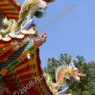 "Pagoda Dragons 4 x 6"""