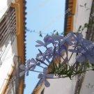"Flowers of Cordoba #1 4 x 6"""