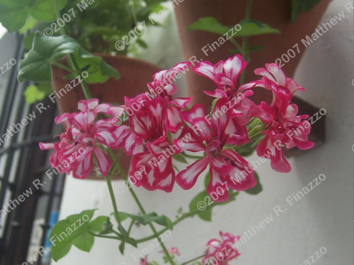 "Flowers of Cordoba #2 4 x 6"""