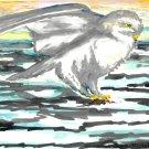 Snow Owl - sku:e1