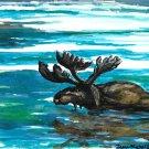Moose in water - sku:f1