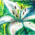 White Lily - sku:j1