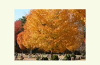 colorful autumn trees, notecards