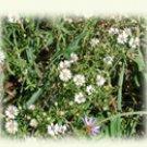 summer wildflowers, image on notecards