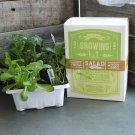 Salad Vegetable Garden Seed Starter Basic Kit 6 Non GMO Garden Grow Healthy Food