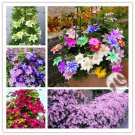 2 Bulbs Multi-Colored Clematis Bulbs Real Rare Clematis Plant Flowers Seeds For Garden Plants
