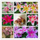 2 Bulbs Perfume Lilies Bonsai Rare Flower Seeds For Garden Plants