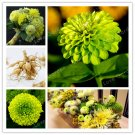 2 Bulb Dahlia Bulbs Beautiful Perennial Dahlia Flower Seeds For Garden Plants