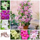 2 Bulb Clematis Bulbs Rare Multi-Colored Clematis Vine Flower Seeds For Garden Plants