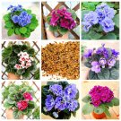 100Pcs Saintpaulia Ionantha Bonsai African Violet Beautiful Plant Flower Seed DIY Home Garden Plants