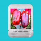 100Pcs Russian Giant Sweet Pepper Vegetable Seeds For Home Garden Plants