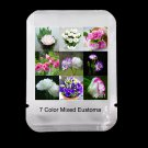100Pcs 7 Colors Mixed Eustoma Flower Seeds For Home Garden Plants