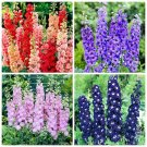 50Pcs Delphinium Bonsai New Mix Packing Flower Seed For Home Garden Plants