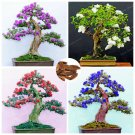 50Pcs Mix Lilac Flower Bonsai Extremely Fragrant Clove Flower Seed For Home Garden Plants